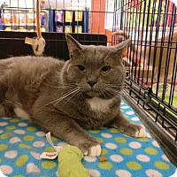 Adopt A Pet :: Andre - Avon, OH