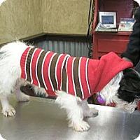Adopt A Pet :: Lucy - McLoud, OK