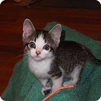 Adopt A Pet :: Watson - Norwich, NY