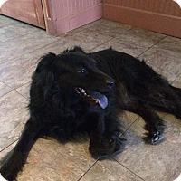 Adopt A Pet :: Ally - Bardonia, NY