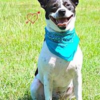 Adopt A Pet :: Van - Walton County, GA