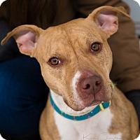 Adopt A Pet :: Remi - Reisterstown, MD