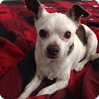 Adopt A Pet :: Wendi - Chandler, AZ