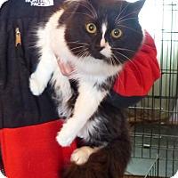 Adopt A Pet :: Gemini - Monterey, VA