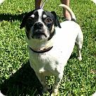 Adopt A Pet :: Rocky Rocket
