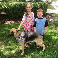 Adopt A Pet :: ELKE-17 - Lithia, FL