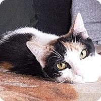 Adopt A Pet :: Mosaic - Island Park, NY