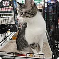 Adopt A Pet :: Spike - West Lafayette, IN