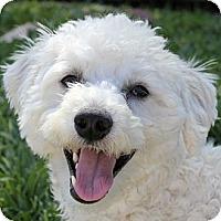 Adopt A Pet :: Bandit - La Costa, CA