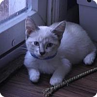 Adopt A Pet :: Gideon - Warren, MI