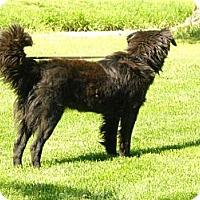Adopt A Pet :: Julie - Denver, CO