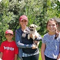 Adopt A Pet :: Hulk - Sacramento, CA