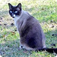 Adopt A Pet :: Miss Coco - Davis, CA