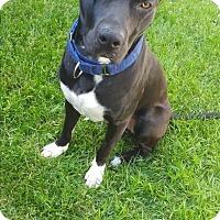Adopt A Pet :: Jack - Caledon, ON