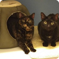 Adopt A Pet :: Olive and Sammy - Novato, CA