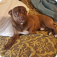 Adopt A Pet :: Hershey - Las Vegas, NV