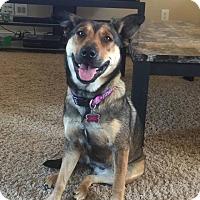 Adopt A Pet :: Gemma - Goldsboro, NC