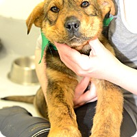 Adopt A Pet :: Chong - Muldrow, OK