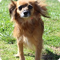Adopt A Pet :: Papillion - Waldorf, MD