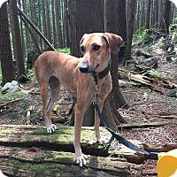 Adopt A Pet :: Skully - Vancouver, BC