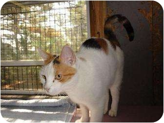 Domestic Shorthair Cat for adoption in Metairie, Louisiana - Mazie