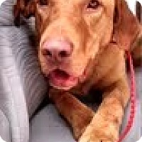 Adopt A Pet :: Dandy - Lewisville, IN