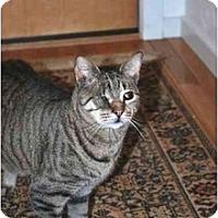 Adopt A Pet :: Cedric - Muncie, IN
