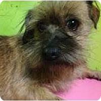 Adopt A Pet :: Willow - pasadena, CA