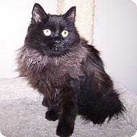 Adopt A Pet :: Selena - Colorado Springs, CO