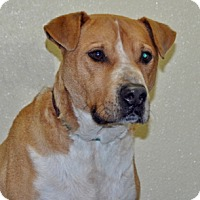 Adopt A Pet :: Midas - Port Washington, NY