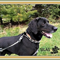 Adopt A Pet :: Silas - New Richmond,, WI