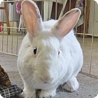 Adopt A Pet :: Rosemary - Foster, RI