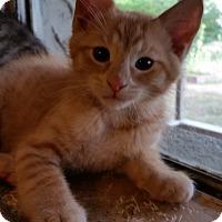 Adopt A Pet :: Emmett - Chattanooga, TN