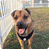 Adopt A Pet :: Mark - Miami, FL