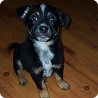 Adopt A Pet :: Skunk - Cleveland, OH