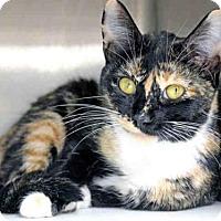 Adopt A Pet :: SALLY - Tallahassee, FL