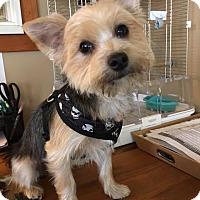 Adopt A Pet :: Jack B Nimble - Sinking Spring, PA