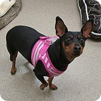 Adopt A Pet :: Mattie - Gilbert, AZ