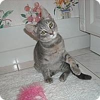 Adopt A Pet :: Lover Boy - Arlington, VA
