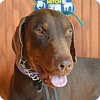 Adopt A Pet :: Tank - Pending!! - New Richmond, OH