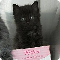 Adopt A Pet :: Peach - Athens, GA