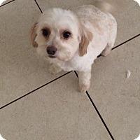 Adopt A Pet :: Princess - Pembroke pInes, FL