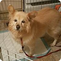 Adopt A Pet :: Summer - Creston, CA