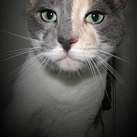 Adopt A Pet :: Aisa - Sarasota, FL