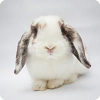 Adopt A Pet :: Tapioca - Los Angeles, CA