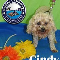 Adopt A Pet :: Cindy - Arcadia, FL