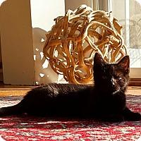 Adopt A Pet :: Moonpie - Fairfax, VA