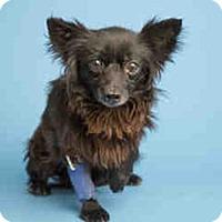Adopt A Pet :: ON EUTHANASIA LIST! Only $25! - Litchfield Park, AZ