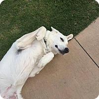 Adopt A Pet :: Lucy - Kiowa, OK