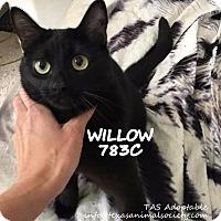 Adopt A Pet :: Willow - Spring, TX